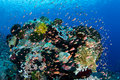 Colorful Fish and Vibrant Reef in Alor Royalty Free Stock Photo