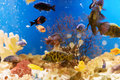 Colorful Fishes in Blue Water Stock Image