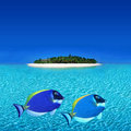 Colorful fishes near Atoll Island Royalty Free Stock Images