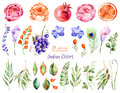 Colorful floral collection with roses, flowers, leaves, pomegranate, grape, callas, orange, peacock feather Royalty Free Stock Photo