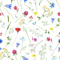 Colorful floral pattern with wild flowers and herbs