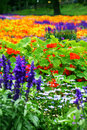 Colorful flower bed different types flowers Stock Photography