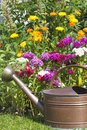 Colorful flower bed with lilies sweet william and an old copper watering can Stock Image