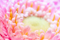 Colorful flower closeup selective focus on beautiful background Royalty Free Stock Photos