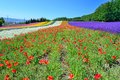 Colorful flower field hokkaido japan irodori tomita farm furano it is the famous and beautiful fields in Stock Photos