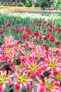 Colorful flower fields Royalty Free Stock Photo