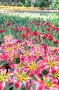 Colorful Flower Fields