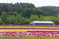 Colorful flower fields of Tomita farm, Furano, Hokkaido
