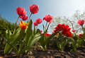 Colorful flower garden Stock Image