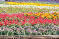 Colorful flower garden of background Royalty Free Stock Photography