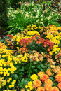 Colorful flower garden beautiful bed Royalty Free Stock Image