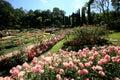 Colorful Flower Garden In Mae ...