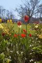 Colorful flower garden in spring Royalty Free Stock Photo