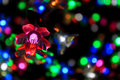 Colorful Flower Of Light Royalty Free Stock Photo