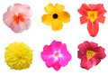 Colorful Flower Pack Stock Image