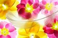 Colorful flower petals with feather Royalty Free Stock Photo