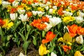 Colorful flower sea with tulips in the park Royalty Free Stock Photo