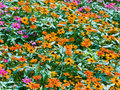 Colorful flowerbed Stock Photography