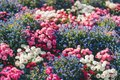 Colorful flowerbed with mixed flowers Royalty Free Stock Photo