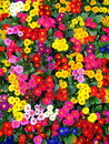 COLORFUL FLOWERS Stock Image