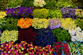 Colorful flowers background. Stock Photos