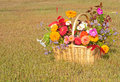 Colorful flowers in a basket Stock Images
