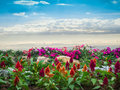 Colorful flowers and blue sky Royalty Free Stock Photo