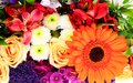Colorful flowers bouquet isolated on white backgroundr Stock Photography