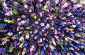Colorful flowers On the ceiling Royalty Free Stock Photo