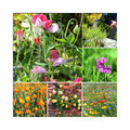 Colorful flowers in a collage of six photographs of honesty sweet peas marigolds roses and wild Stock Photography