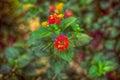 Farbistý kvety v záhrada