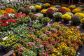Colorful Flowers In Market