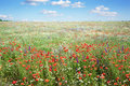 Colorful flowers in meadow Royalty Free Stock Photo
