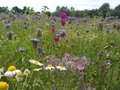 Colorful flowers in a meadow near the forest Royalty Free Stock Photo