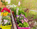 Colorful flowers in pots on the balcony Royalty Free Stock Photo