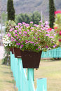 Title: Colorful flowers on potted plants.