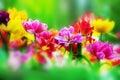 Colorful Flowers In Spring Gar...