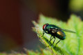 Colorful fly sitting on a leaf large macro Stock Photo