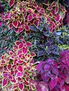 Colorful foliage Stock Photos