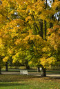 Colorful foliage in the autumn lazienki krolewskie park in warsa warsaw poland Royalty Free Stock Image