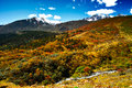 Colorful forest hailuogou conch gully national glacier forest park china mount gongga high m highest mountain sichuan china Stock Photo