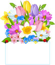 Colorful Fresh Spring Flowers