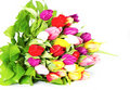 Colorful fresh tulip flowers Stock Photography