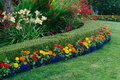 Colorful garden a beautiful display featuring a curved boxwood hedge surrounded by daylilies crocosmia and small zinnias and Royalty Free Stock Images