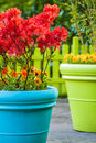 Colorful garden view with a blue and a green flower pot pots filled flowers Stock Photo
