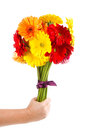 Colorful gerbera flowers bouquet a Stock Image