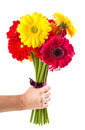 Colorful gerbera flowers bouquet a Royalty Free Stock Images