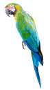 Colorful green parrot macaw isolated on white background Royalty Free Stock Images