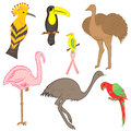 Colorful Hand Drawn Exotic Tropical Birds. Doodle Drawings of Parrot, Ostrich, Emu, Hummingbird, Hoopoe and Toucan. Flat Style