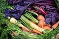 Barvitý úroda